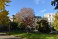 Planchon ( Square )